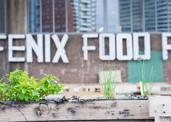 Spotted-by-Chris-Fenix-Food-Factory